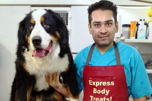 اصلاح مو سگ های بزرگ