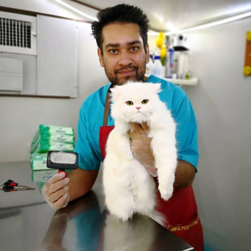 آرایش موی گربه پرشین توسط حسام حسینی