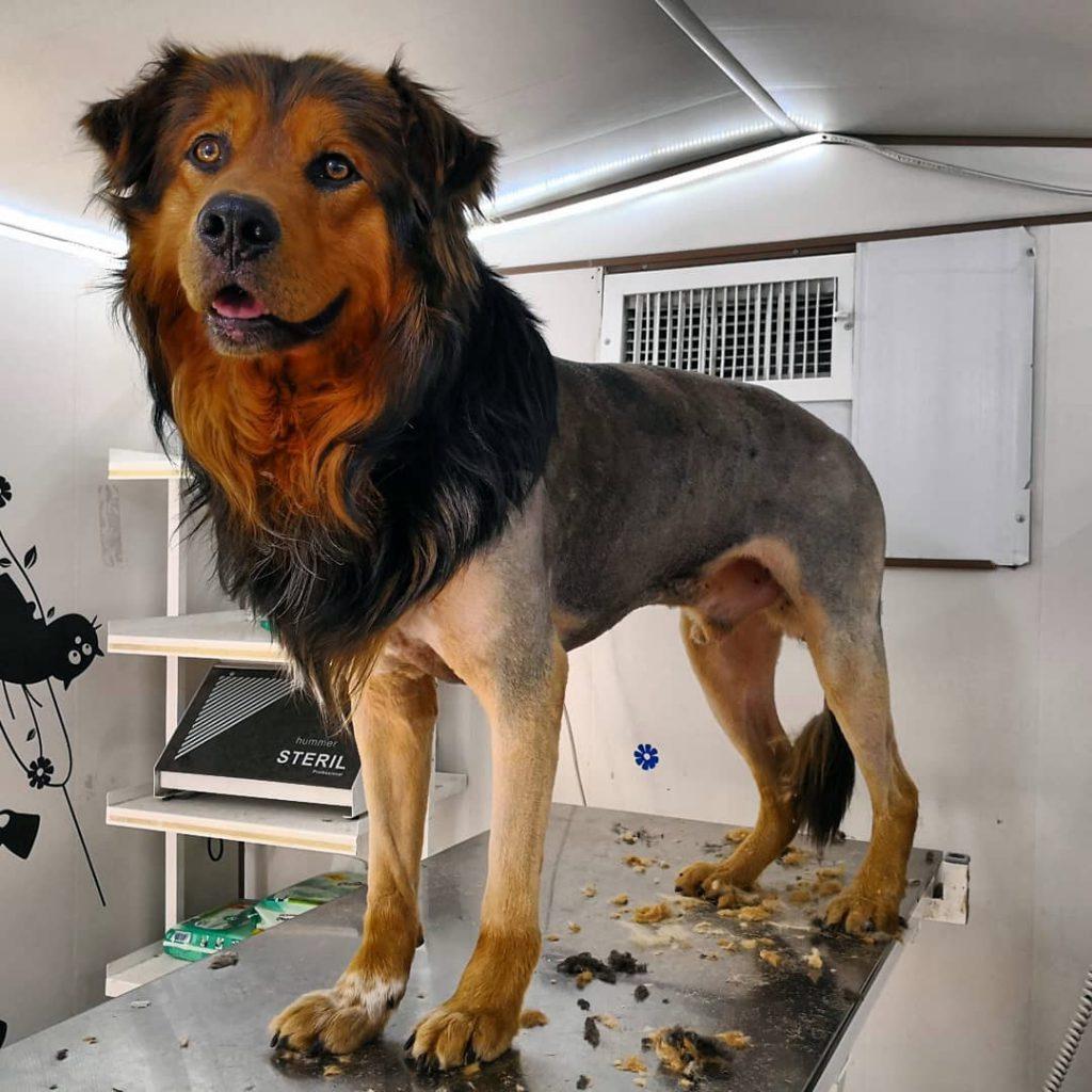 آرایش سگ بزرگ توسط حسام