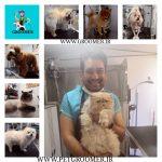 بهترین آرایشگر سگ های ایران