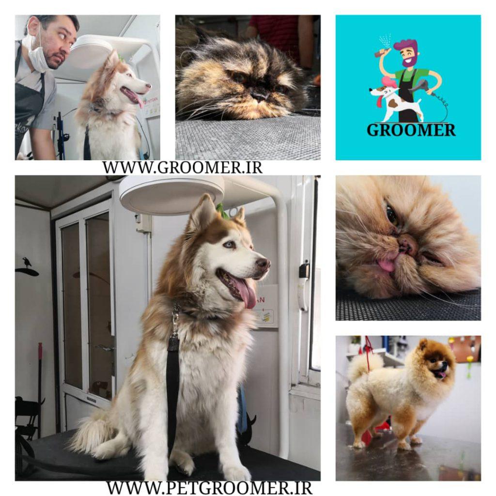 آرایش موی سگ توسط حسام حسینی